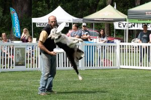 2018_BB_Disc Dogs_SA__111