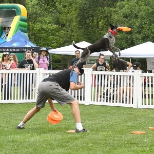 2018_BB_Disc Dogs_SA__6